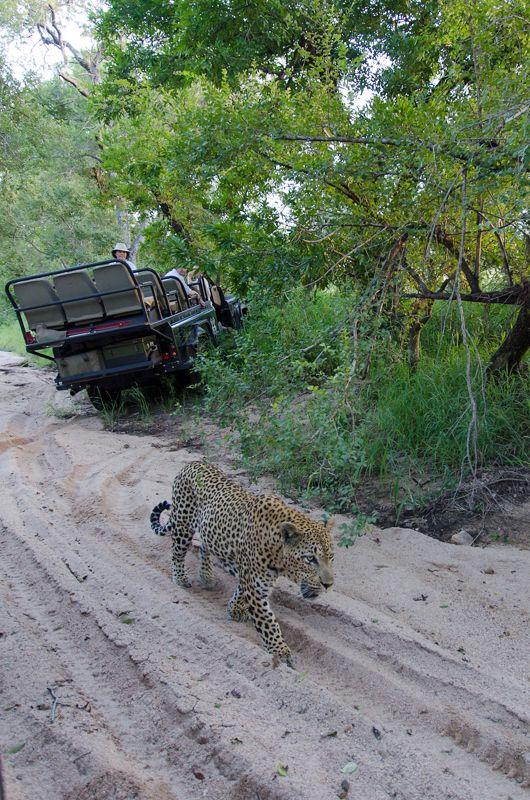 Sabi Sands South Africa Wildlife