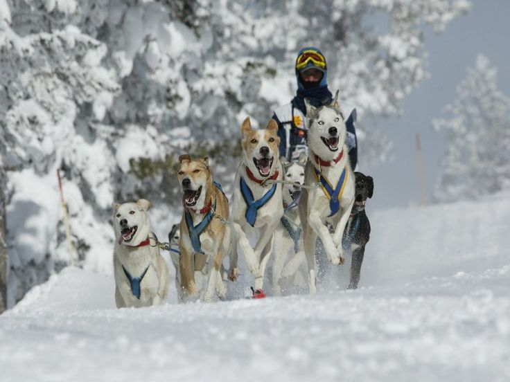 carrera de perros Pirena