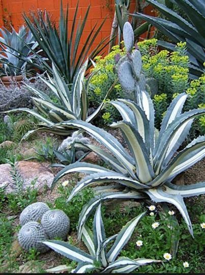 488 best desert landscaping ideas images on pinterest for Palm springs landscape design