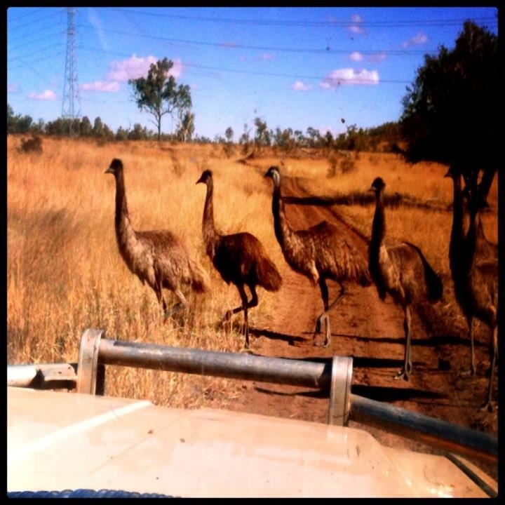 Australian Outback, Queensland.x