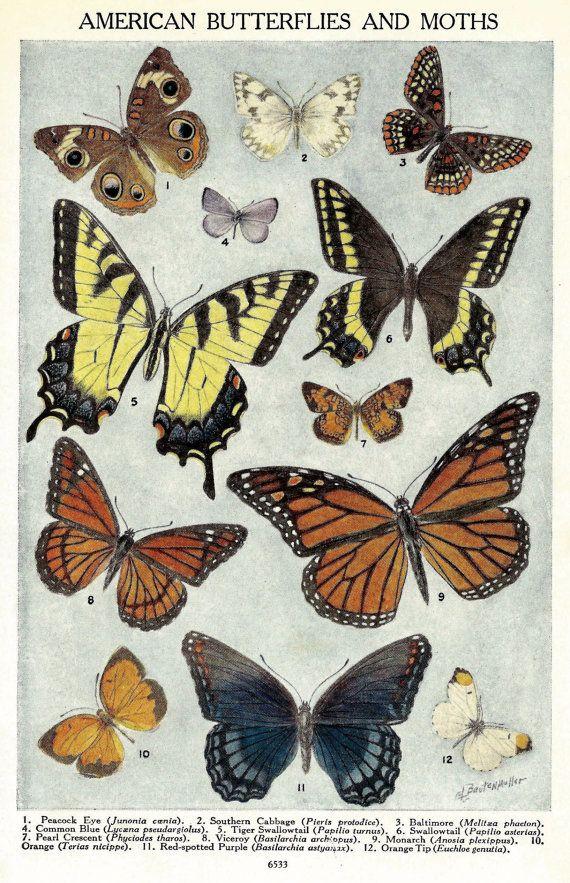 Illustration Vintage papillon  1920 ' s par zippitydoodlepaper, $8.00