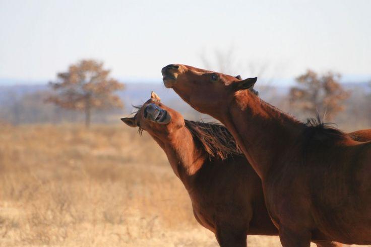 7 bisarra men roliga fakta om våra älskade hästvänner - http://blog.luckyhooves.se/7-bisarra-men-roliga-fakta-om-vara-alskade-hastvanner/