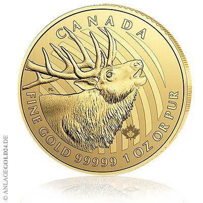 Die Royal Canadian Mint hat die vierte Goldmünze aus der CALL OF THE WILD-Serie herausgegeben: BULKING ELK bzw. auf deutsch: röhrender Elch. Elch aus fünf-neuner-Gold Der Elch ist wie seine drei Vo…