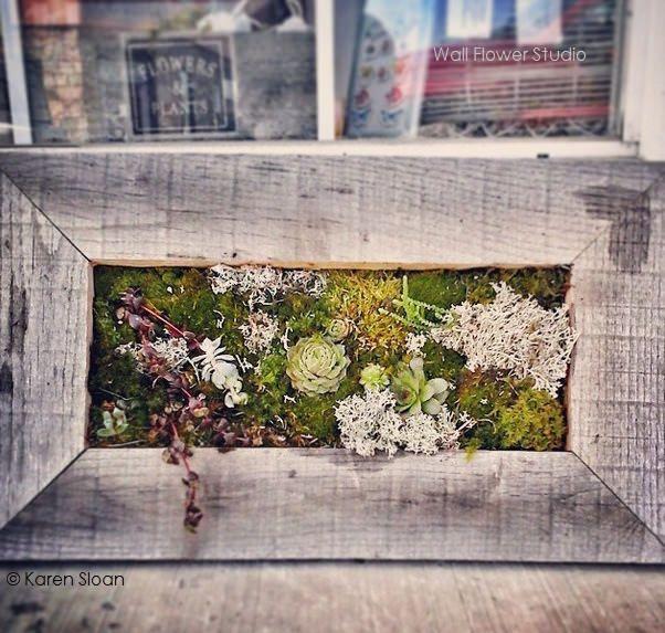 succulent vertical  garden + moss & lichens