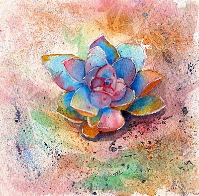 Teri's Painted Daisies: Cactus Monday - Succulents