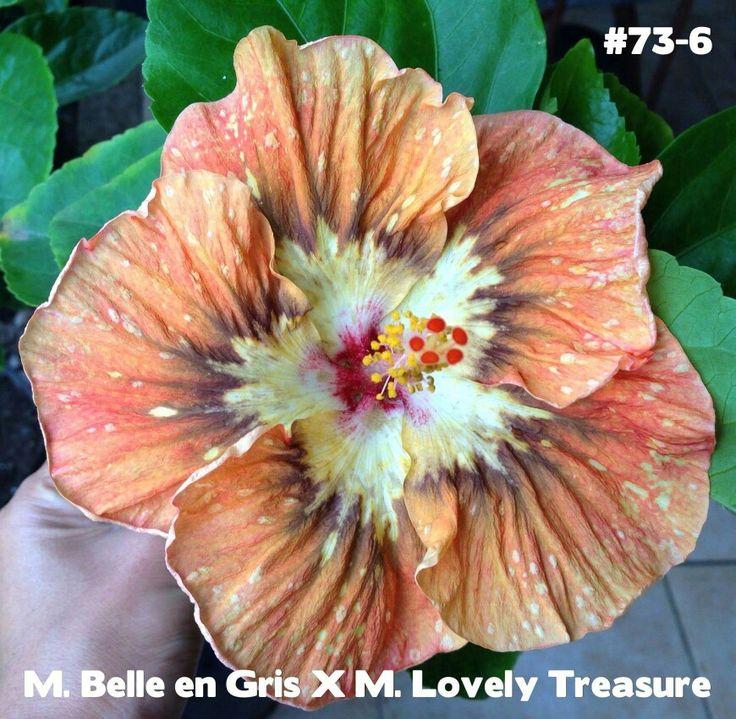 """M. Belle en Gris""  X   ""M. Lovely Treasure""...."