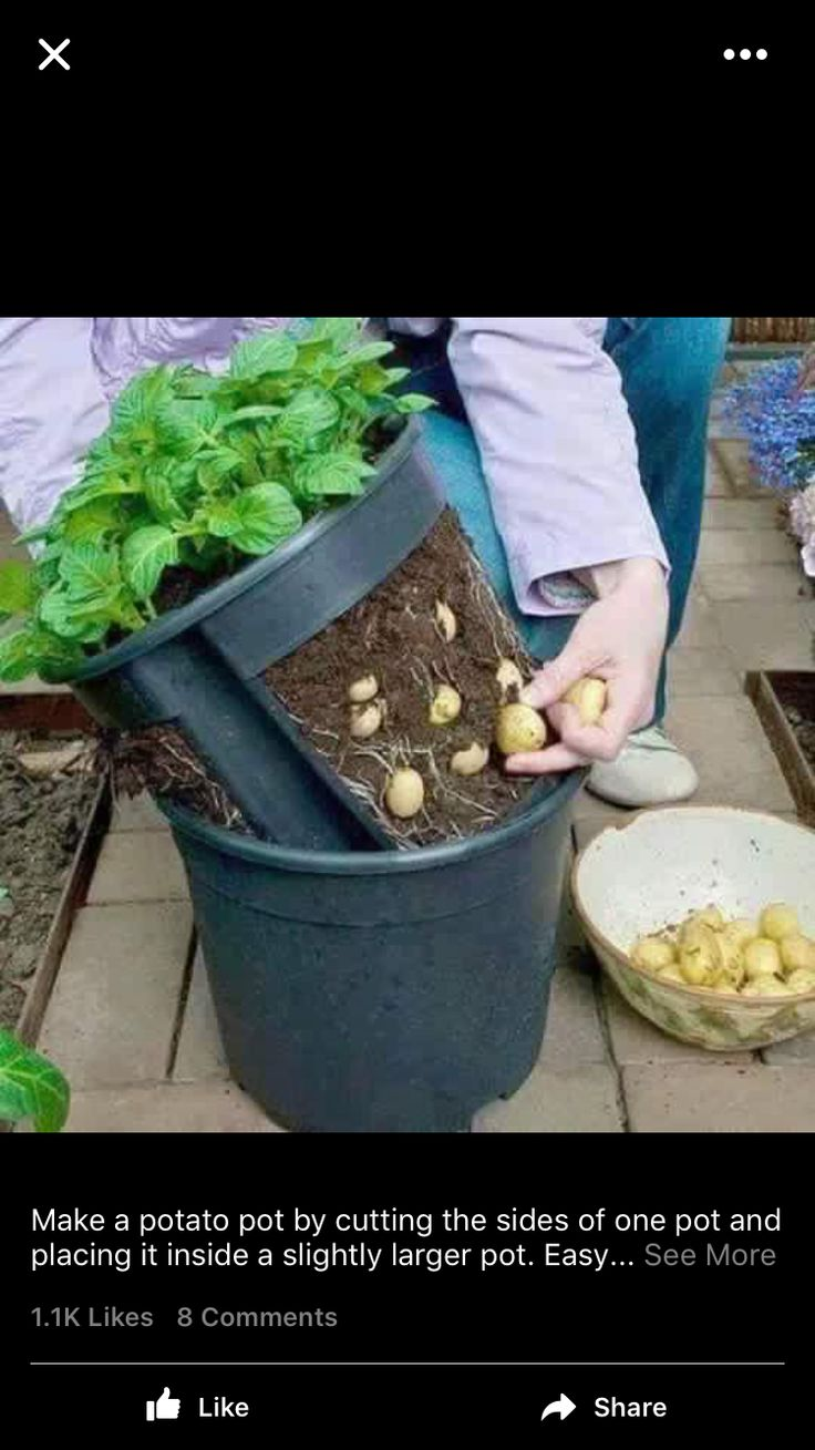 12 best golf cart images on pinterest golf carts electric and make a potato pot by cutting out the sides of a pot and putting it inside another pot lift the inner pot to harvest the potatoes fandeluxe Gallery