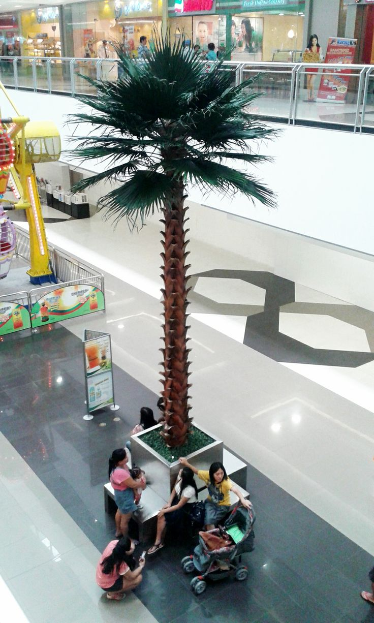 Washingtonia Palms at SM Southmall Philippines