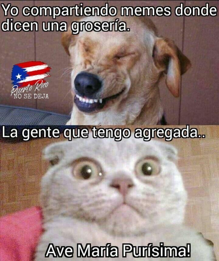 Pin By Nitza I Marin On Mi Puerto Rico Funny Memes Humor