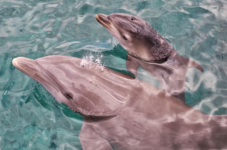 Fun Fact Friday! Did you know that dolphins don't drink water and never fully go to sleep? Check out more fun dolphin facts here: