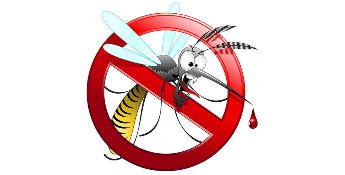 Zanzare: rimedi naturali fai da te