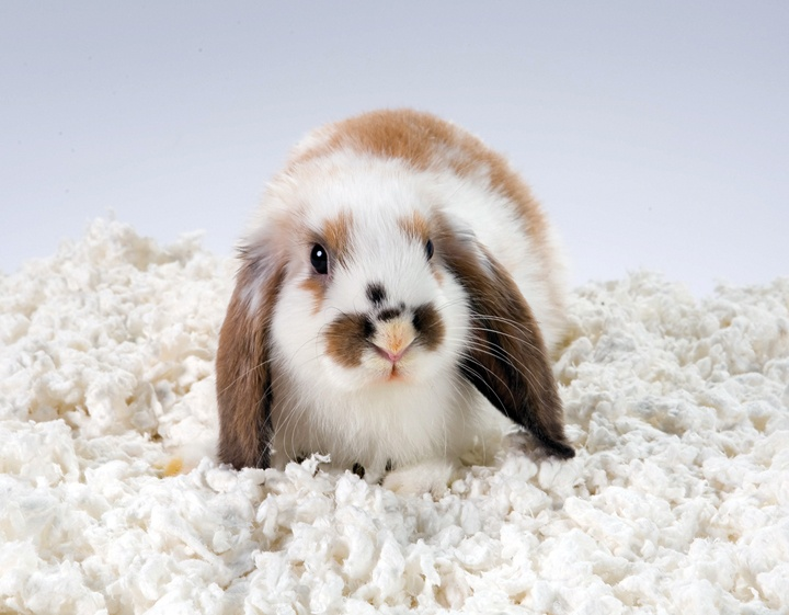 52 best rabbit care images on pinterest | bunny rabbits, house