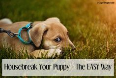 Getting a new puppy is awesome, housebreaking not so much. Follow these 7 fabulous tips to housebreak a puppy in no time at all.