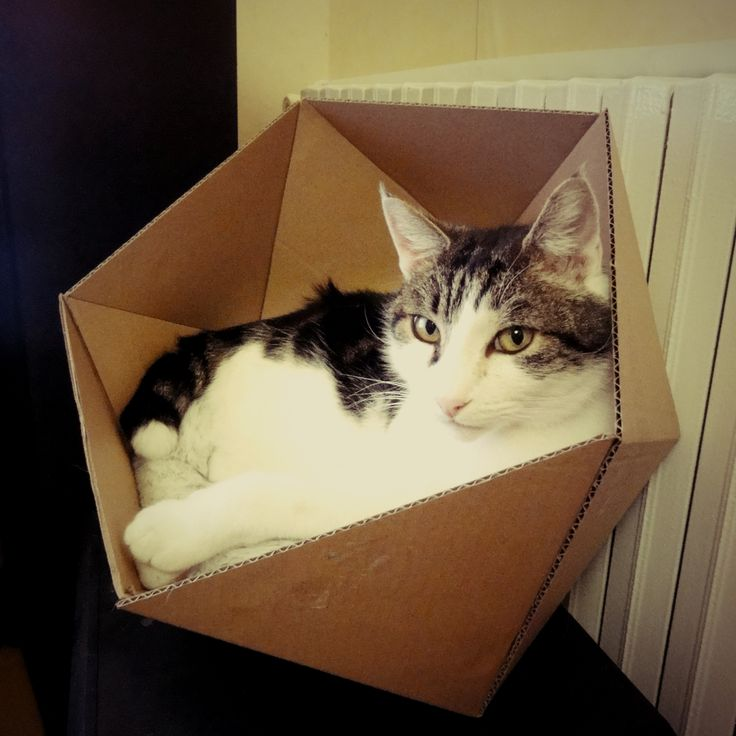 Le panier du chat fait à partir du tuto suivant : http://www.instructables.com/id/DIY-Triangle-Organizers/step5/Cardboard-Organizer-3/ (à plat, l'hexagone mesure 88cm de diamètre)