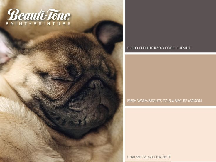 #BeautiTone's comfort palette paints your room in cozy hues of sweet surrender.