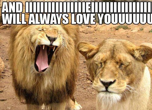 6a28083044a0c6bc87c7f37ce423faff lion love whitney houston 85 best lion memes images on pinterest animals, funny shit and,Lions Meme