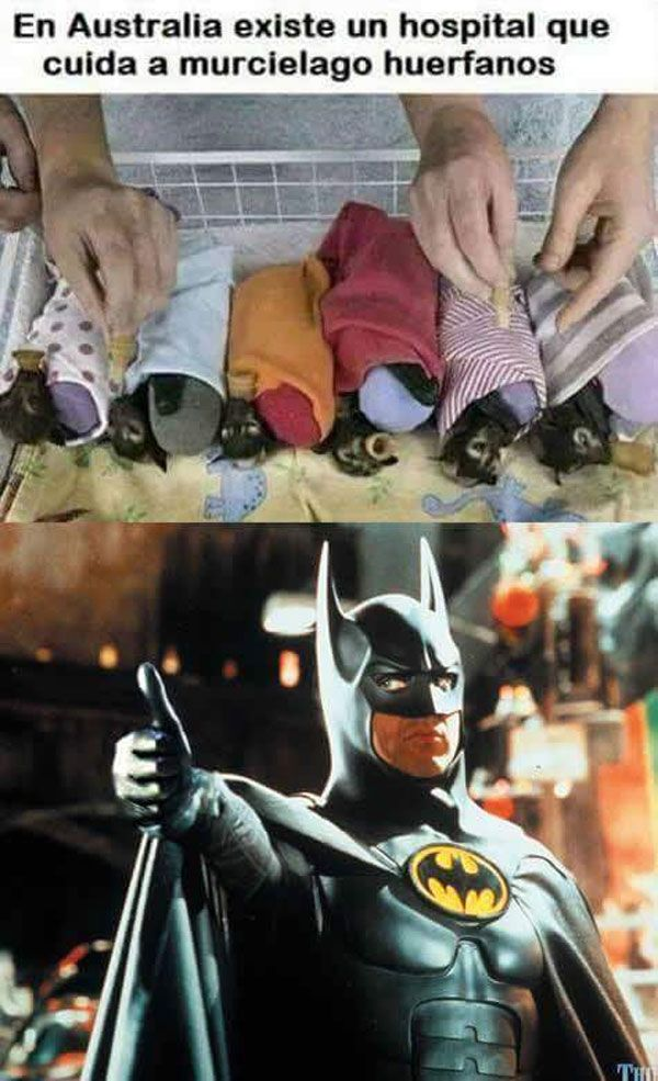 Hospital de murciélagos huérfanos. Que hermoso!¡ <3