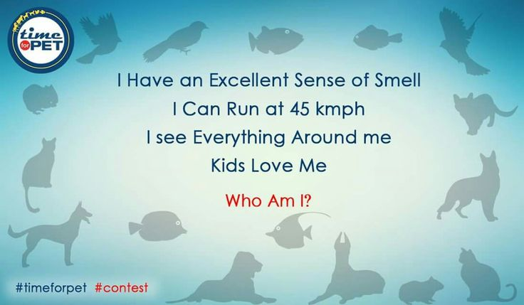 Find the animal in the riddle. #timeforpet #contestalert #contest #timeforcontest #riddle #solveitwinit #pets #bangalore #friday