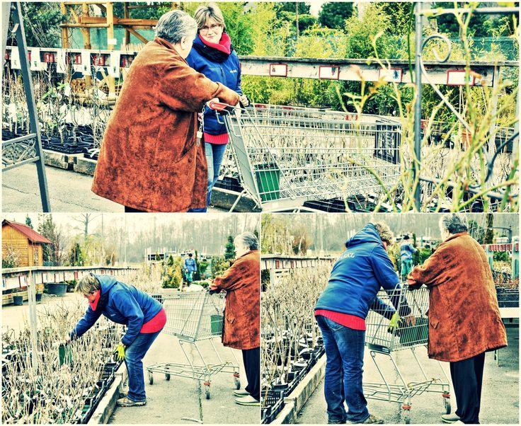 Nevíte si rady a potřebujete poradit s výběrem rostlin? V Zahradním centru STARKL zahradník v Čáslavi Vám naši zahradníci ochotně poradí a pomohou s výběrem vhodných rostlin dle Vašich požadavků.