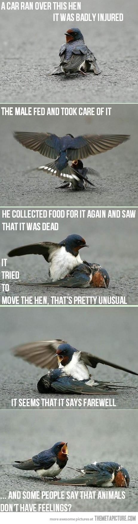 And some people say animals don't have feelings…or some idiot mistakes a bird having sex with a dead bird as caring.