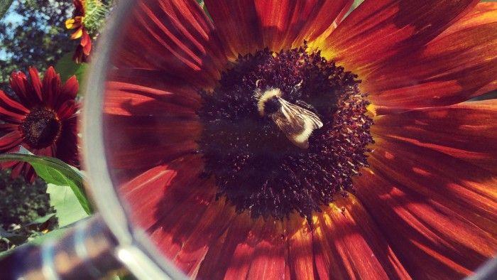 Honung är bakteriedödande och biter också på en del svampar. Numera använder man honungsomslag inom vården vid svårläkta sår, liggsår och brännskador. Den bakteriedödande effekten beror dels på att honungen innehåller så mycket socker att bakterier och svampar inte kan överleva i en honungsmiljö och dels på att honungens surhetsgrad gör att bakterier inte trivs