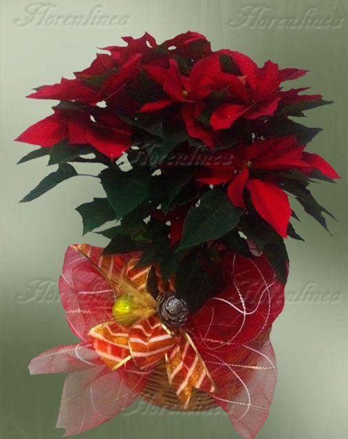 Resultado de imagen para flores navideñas naturales