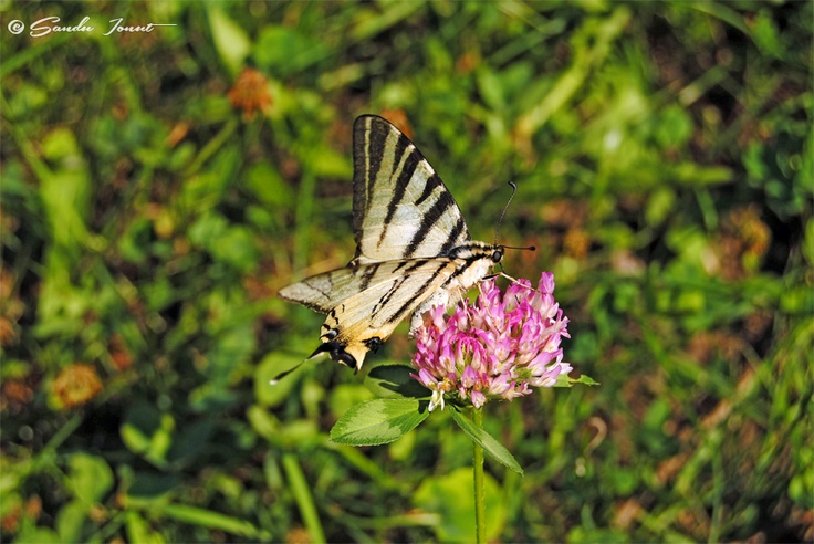 Love is like a butterfly: It goes where it pleases and it pleases wherever it goes