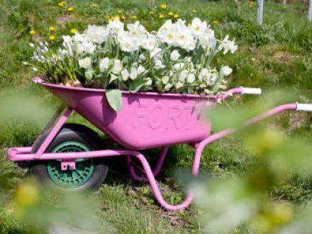 Wheelbarrow Planter. 50 white tulip bulbs, wheelbarrow, drill, paint, paintbrush, potting soil & water. Click through to learn more!