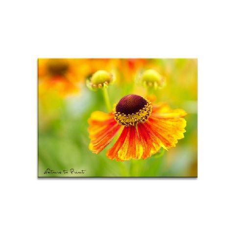 Blumenbild Tanz mit der Sonnenbraut im Garten