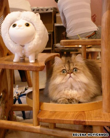 Neko cafes in Tokyo!!! Pet a cat while you sip your coffee! Yes, please!!! =(^.^)=