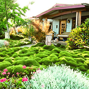 1000 ideas about grass alternative on pinterest lawn for Half acre backyard landscaping ideas