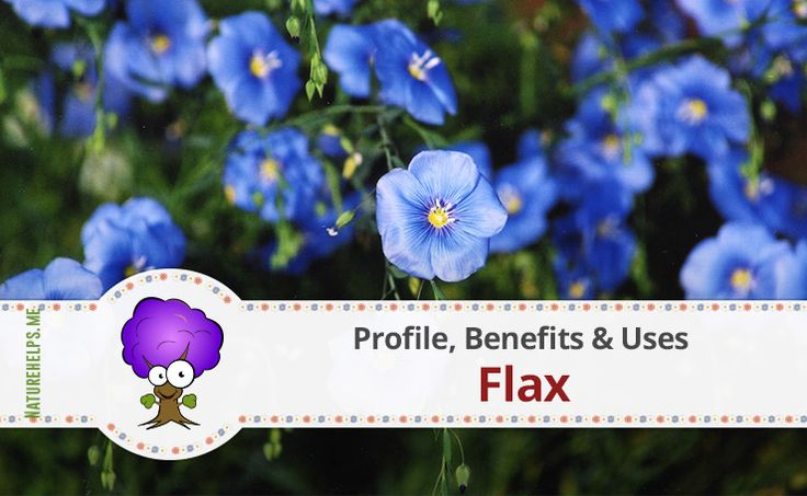 Flax. Profile, Benefits & Uses  Since the earliest times, flax has been known to have healing properties. Flax is grown for its oil, used as a nutritional supplement, and as an ingredient in many wood-finishing products. Flax is also grown as an ornamental plant in gardens. Flax fibers are used to make linen
