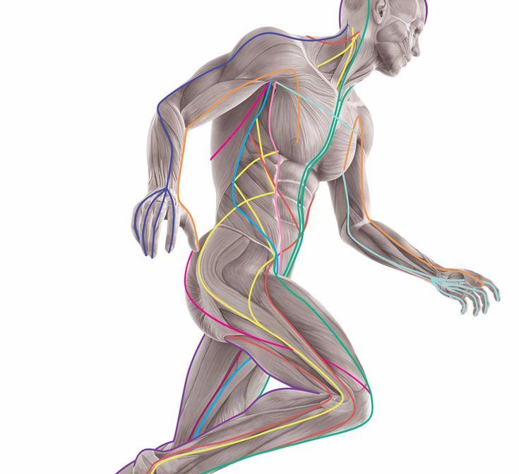 Экология здоровья: Представляем урок от врача-остеопата, практика Александра Смирнова. В нём он рассказывает и показывает...