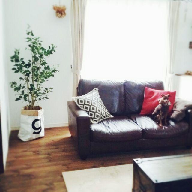 Reiyaさんの、日曜日,ペーパーバッグ,ニトリ,ニトリのフェイクグリーン,クラフト紙袋,柿渋塗装,無垢の床,パイン材,リビング,のお部屋写真