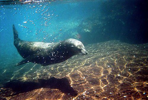 Adipiscor - ¡Conoce las Islas Galápagos! - Ecuador
