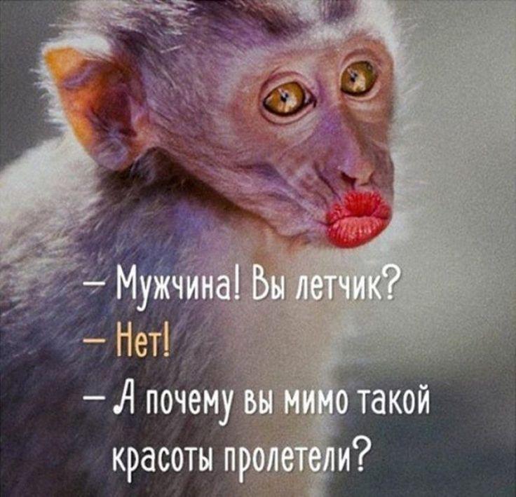 я такая лапочка я такая цаца на меня красавицу не налюбоваться песня: 6 тыс изображений найдено в Яндекс.Картинках