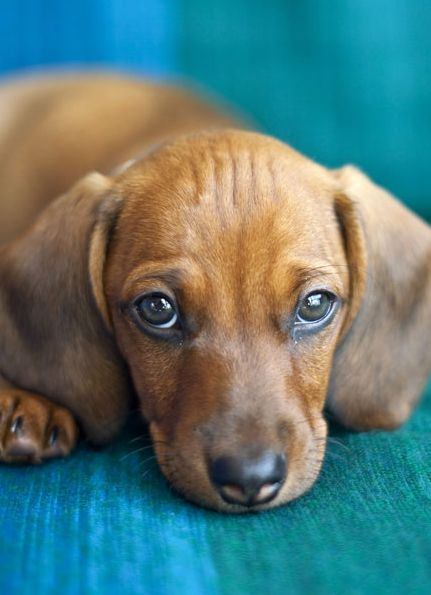 Does Your Dog Throw Up After Eating? Here's How To Fix It. Worried your dog isn't well and is throwing up constantly? Here's how to help.