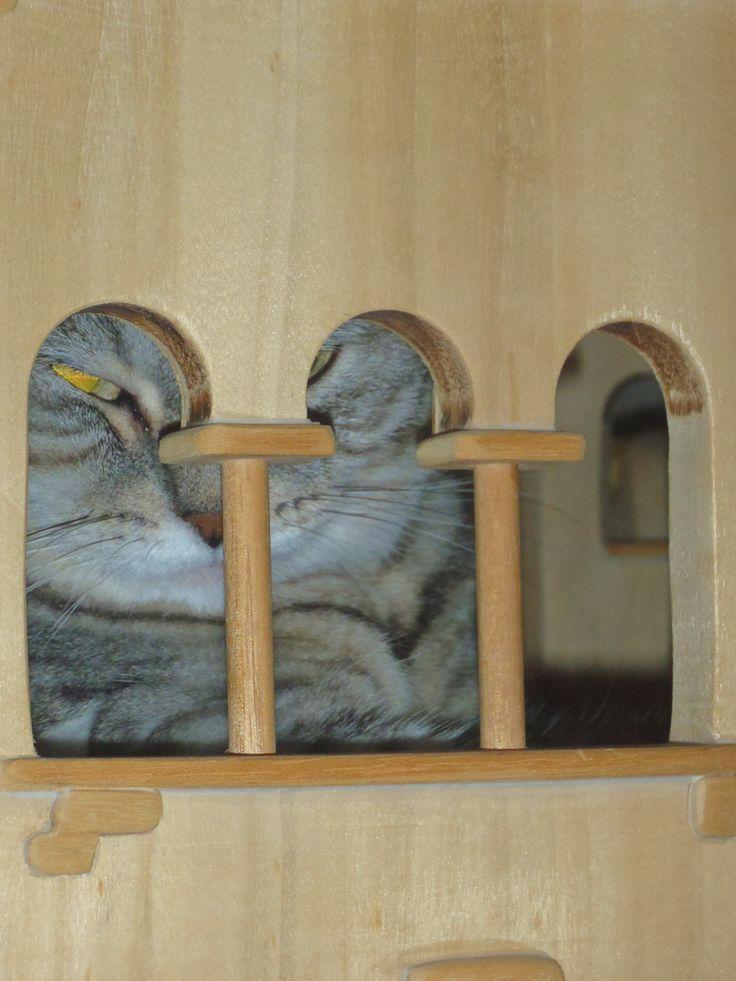 DomusfeliS - special playzones for cats #catcastle #cattower #catcondo #cattree #catscratchforniture #castlecat