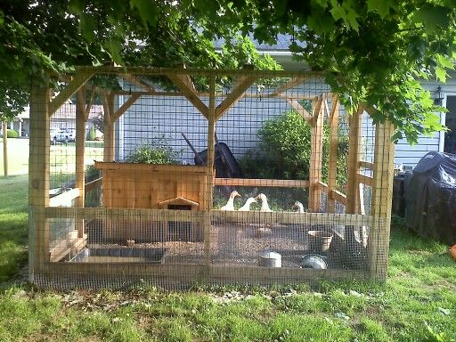 25 best ideas about duck coop on pinterest duck duck for Chicken enclosure ideas
