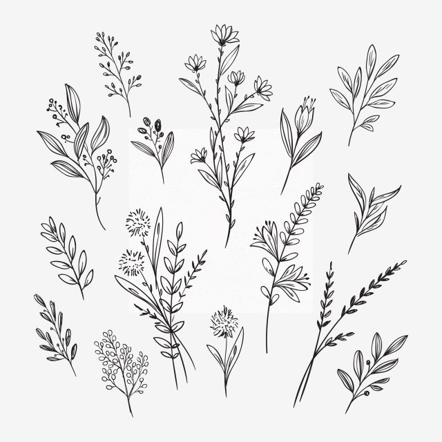 Flower Handraw Flower Outline Flower Handraw Flower Png And Vector With Transparent Background For Free Download Flower Outline Flower Drawing Realistic Flower Drawing