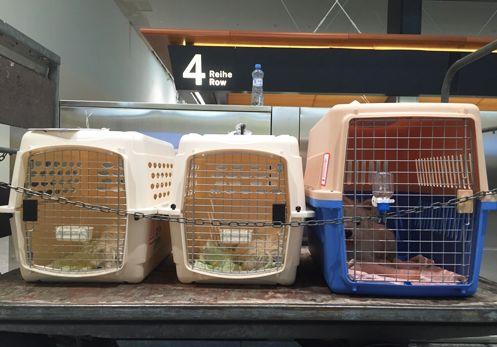When you settle in Singapore, there are many requirements imposed on you if you plan to move with your pet. We have been offering our pet relocation services to our clients for decades. Contact us today if you require a flawless pet relocation service.
