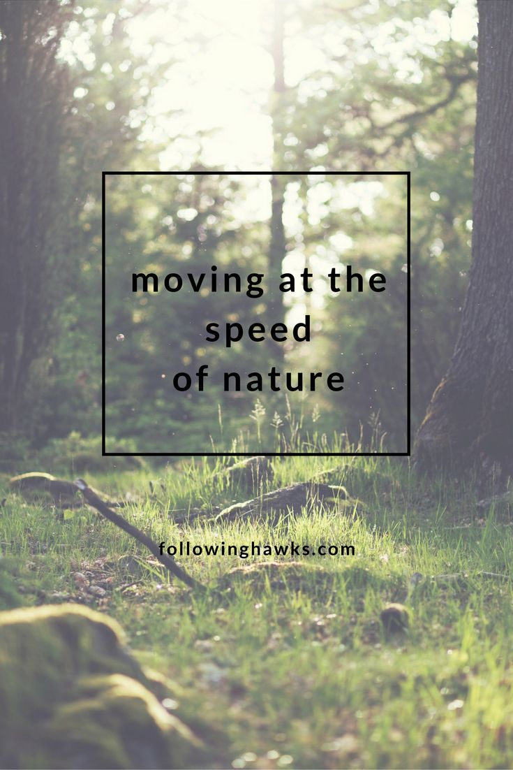 Moving at the Speed of Nature. What speed do you move at? Following Hawks. Taking cues from nature and listening to my guides. Most of the time.