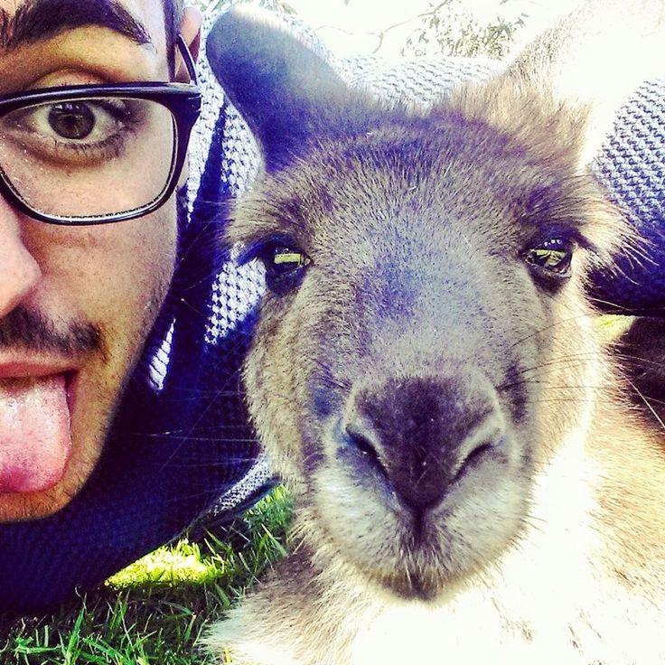 Josie the kangaroo at UltimateOz basecamp <3