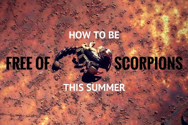How to Be Free of Scorpions This Summer in Arizona | North Phoenix Moms Blog