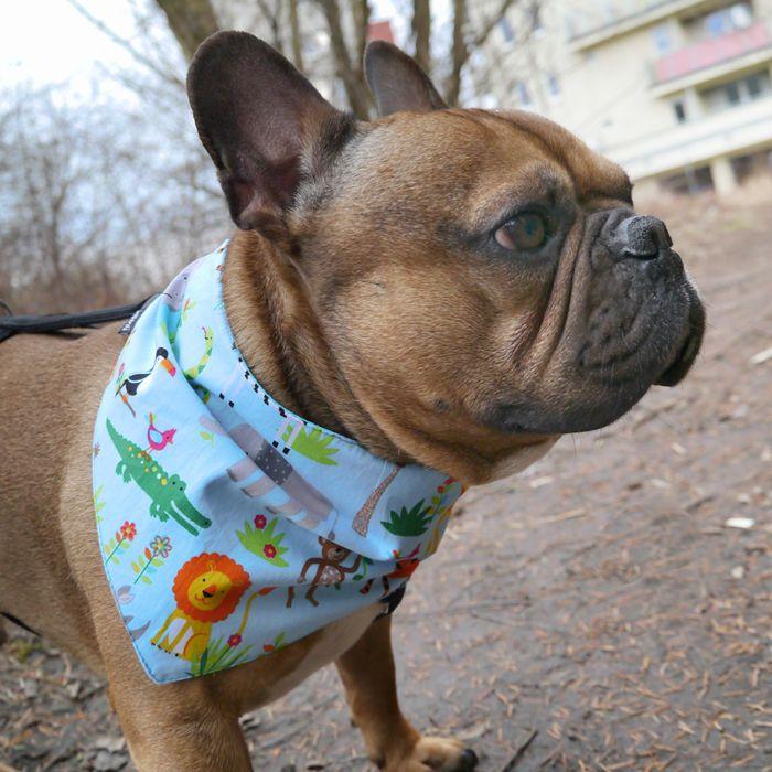 Bandana dla psa z imieniem, niebieska chusteczka zapinana na rzep Zoo – Cena | sklep internetowy Psiakrew