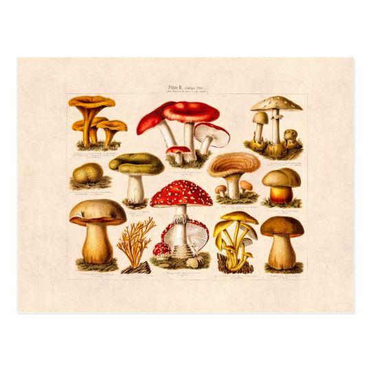 Champignons vintages de rouge de variété de cartes postales