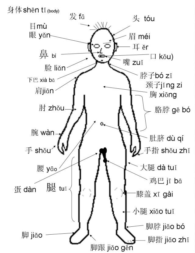 Body Parts Labeled In Spanish