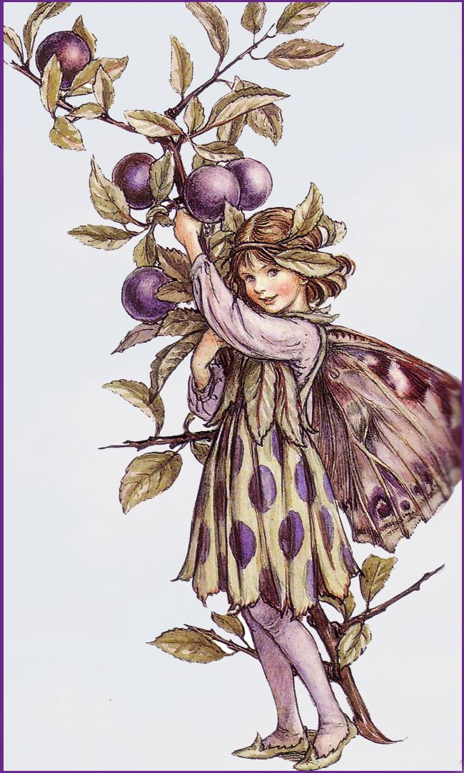 The Song Of The Sloe Fairy, an autumn Flower Fairy poem:  And now is Autumn here, and lo,  The Blackthorn bears the purple sloe!  But ah, how much  Too sharp these plums,  Until the touch  Of Winter comes!