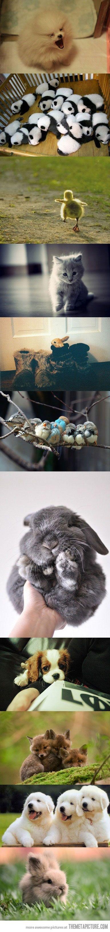 Little balls of fur