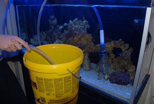 how to safely clean a fish tank